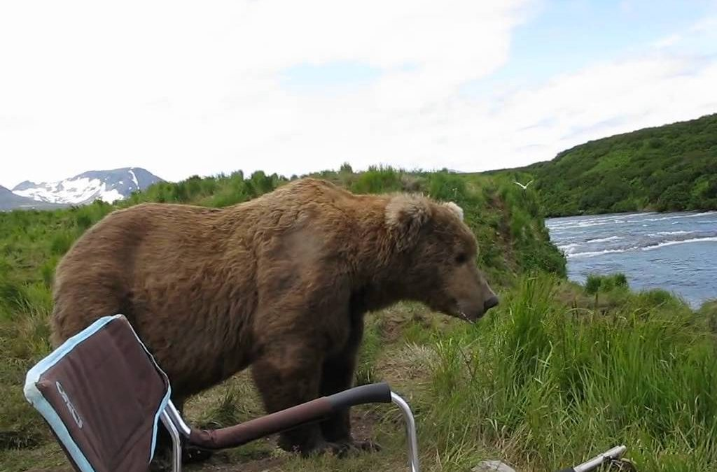 Wild Bear Chills Out Next To Man
