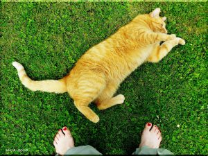 10 Ways Your Cat Shows They Love You